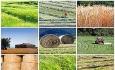 آمایش سرزمینی حلقه مفقوده توسعه کشاورزی  آذربایجان غربی