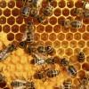 بهره برداری از نخستین آزمایشگاه مرجع زنبور عسل کشور  در آذربایجان غربی