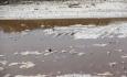 ورود آب خزر به دریاچه ارومیه صلاح نیست