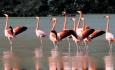 مرگ مشکوک۲۰۰۰ پرنده دراطراف دریاچه ارومیه