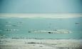 افزایش دما باعث جدایی شمال و جنوب دریاچه ارومیه خواهد شد
