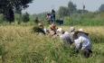کشاورزان بلاتکلیف و زیانهای اقتصادی و اجتماعی