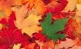 پاییزتزه گلمیشدی