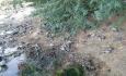 عامل تلفات کبوتران در سلماس بیماری تنفسی است