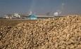 خرید بیش از یک میلیون و ۶۰۰ هزار تن چغندرقند در آذربایجان غربی