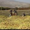 وزیر جهاد کشاورزی پاسخگوی وضعیت بحرانی بازار سیب باشد