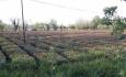 دولت برای خسارات گسترده کشاورزان آذربایجان غربی تصمیماتی اتخاذ نماید