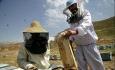 آذربایجان غربی قطب اول تولید عسل