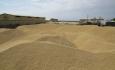 ۱۴۱ هزار تن گندم در آذربایجان غربی خریداری شد