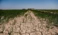 دولت خسارت کشاورزان آذربایجان غربی را پرداخت نکرده است