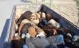 مسئولان با قاچاق دام زنده از آذربایجانغربی به شدت برخورد کنند