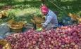 کشاورزی در حال حاضر برای مردم آذربایجان غربی صرفه اقتصادی ندارد