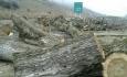 قطع وسیع درختان در آذربایجان توسط مافیای نامعلوم  انجام میشود