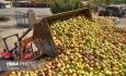 فاسد شدن ۴۰ هزار تن سیب در سردخانه های آذربایجان غربی
