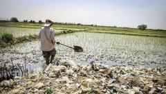 دولت به کشاورزان خسارت دیده آذربایجان غربی  وام بلاعوض پرداخت کند