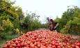 محصولات کشاورزی و صنایع تبدیلی آذربایجانغربی به ویتنام صادر میشود