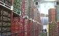 سیب آذربایجان امسال هم در سردخانهها فاسد میشود