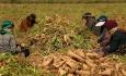 سختگیری و تبعیض باعث تشدید نارضایتی کشاورزان آذربایجانی شده است